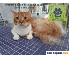 Banho e Tosa para Gatos