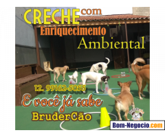 Creche Canina em SJCampos e Jacareí