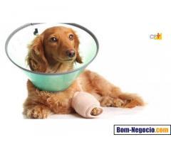 Faço serviços de auxiliar de veterinária