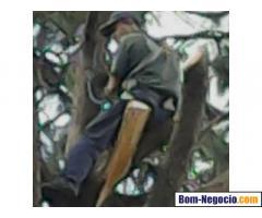 empresa de poda de árvores zap 1198621324
