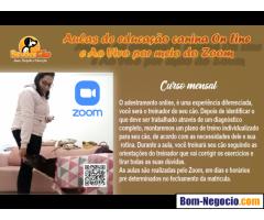 Aulas de educação canina On Line  e Ao Vivo por meio do Zoom